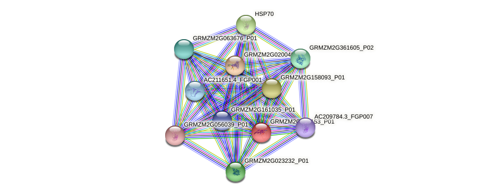 GRMZM2G047153_P01 protein (Zea mays) - STRING interaction network