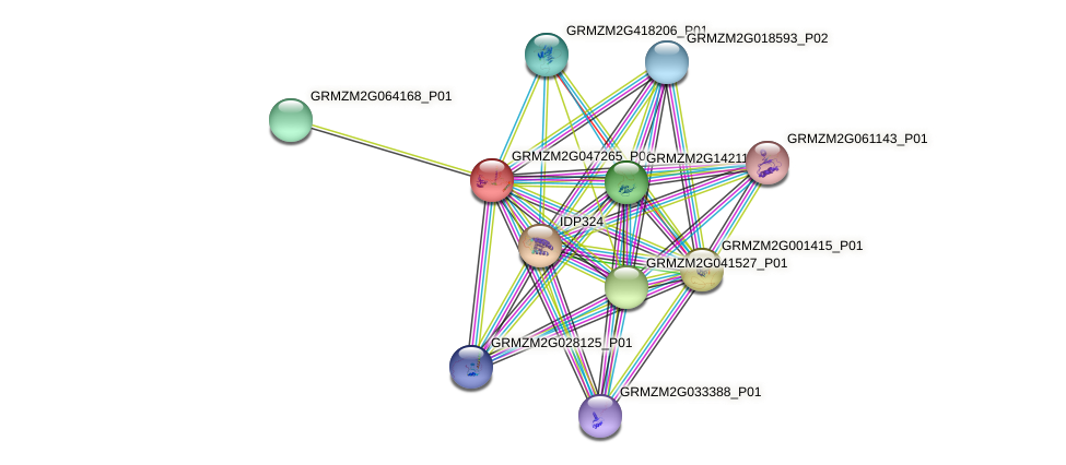 GRMZM2G047265_P01 protein (Zea mays) - STRING interaction network