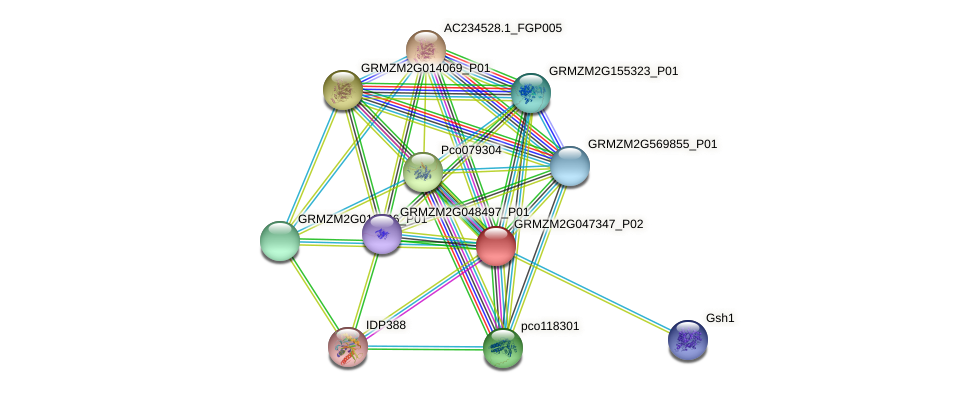 Zm.10852 protein (Zea mays) - STRING interaction network