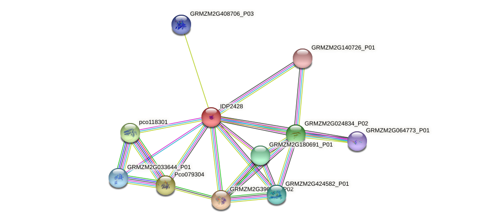 IDP2428 protein (Zea mays) - STRING interaction network