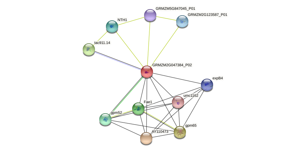 GRMZM2G047384_P02 protein (Zea mays) - STRING interaction network