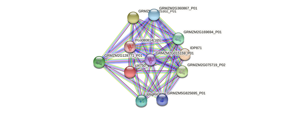 cl4750_1 protein (Zea mays) - STRING interaction network