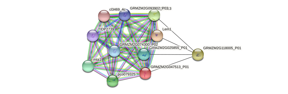 GRMZM2G047513_P01 protein (Zea mays) - STRING interaction network