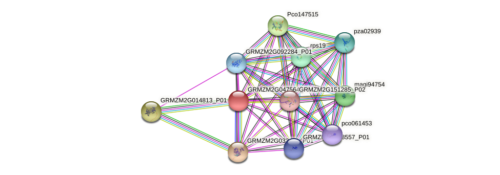 Zm.96089 protein (Zea mays) - STRING interaction network