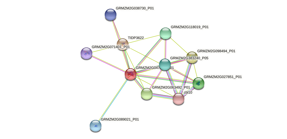 GRMZM2G047616_P01 protein (Zea mays) - STRING interaction network
