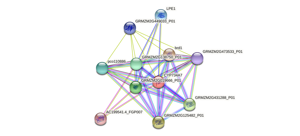 GRMZM2G047684_P01 protein (Zea mays) - STRING interaction network