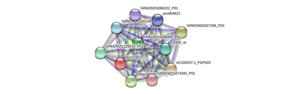 pco110021 protein (Zea mays) - STRING interaction network