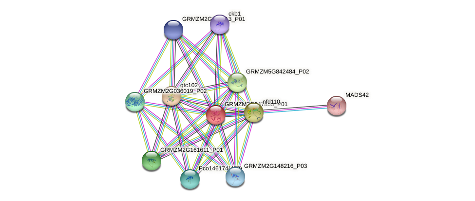 Zm.160374 protein (Zea mays) - STRING interaction network