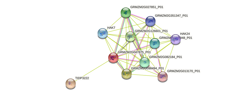 GRMZM2G047875_P01 protein (Zea mays) - STRING interaction network