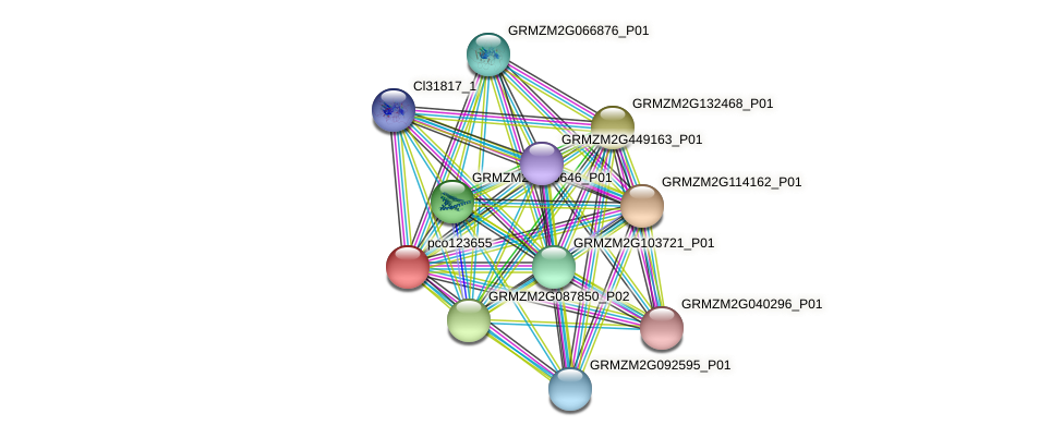 pco123655 protein (Zea mays) - STRING interaction network
