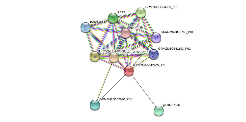 GRMZM2G047905_P01 protein (Zea mays) - STRING interaction network