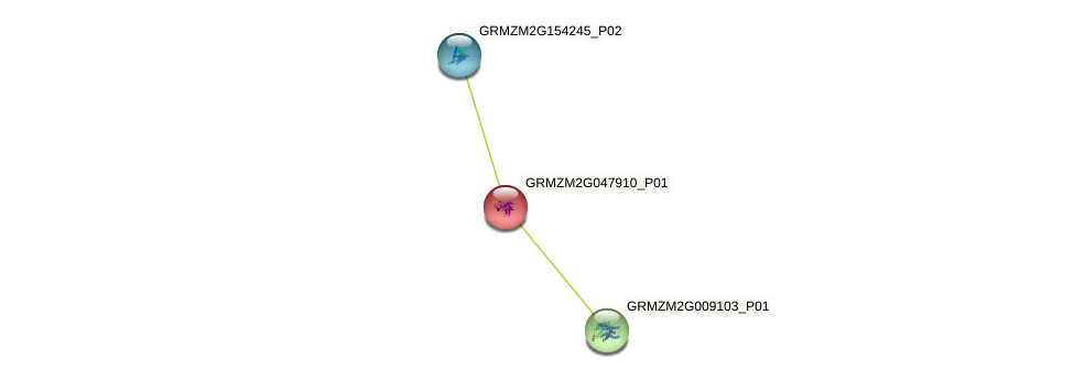 GRMZM2G047910_P01 protein (Zea mays) - STRING interaction network