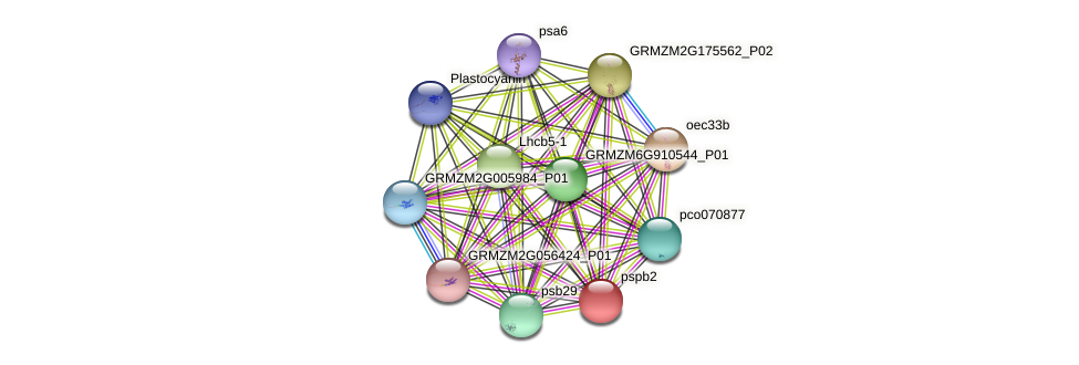 pspb2 protein (Zea mays) - STRING interaction network