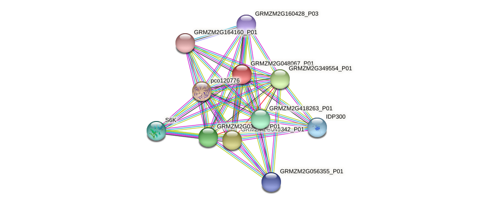 GRMZM2G048067_P01 protein (Zea mays) - STRING interaction network