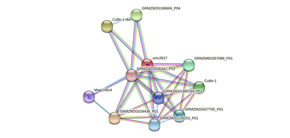 TRAF15 protein (Zea mays) - STRING interaction network