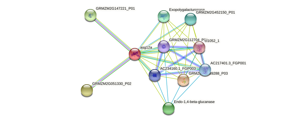asg12a protein (Zea mays) - STRING interaction network