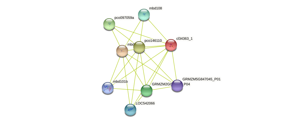 cl34363_1 protein (Zea mays) - STRING interaction network