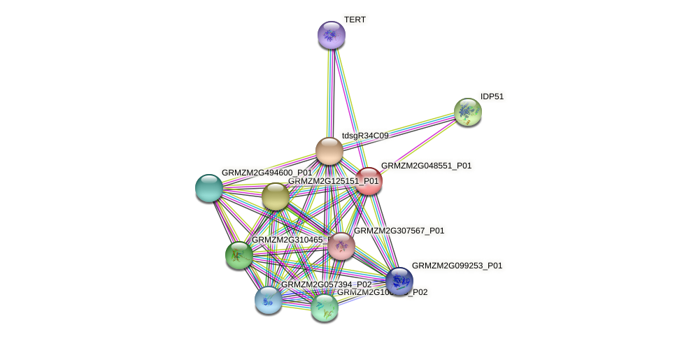 GRMZM2G048551_P01 protein (Zea mays) - STRING interaction network