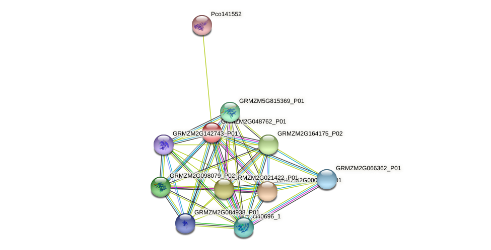GRMZM2G048762_P01 protein (Zea mays) - STRING interaction network
