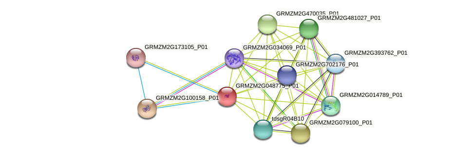 GRMZM2G048775_P01 protein (Zea mays) - STRING interaction network