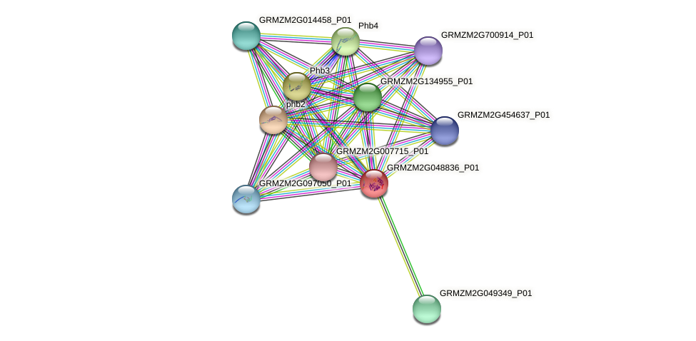GRMZM2G048836_P01 protein (Zea mays) - STRING interaction network