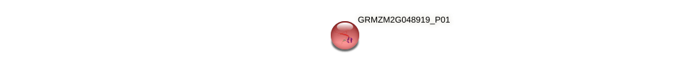 GRMZM2G048919_P01 protein (Zea mays) - STRING interaction network