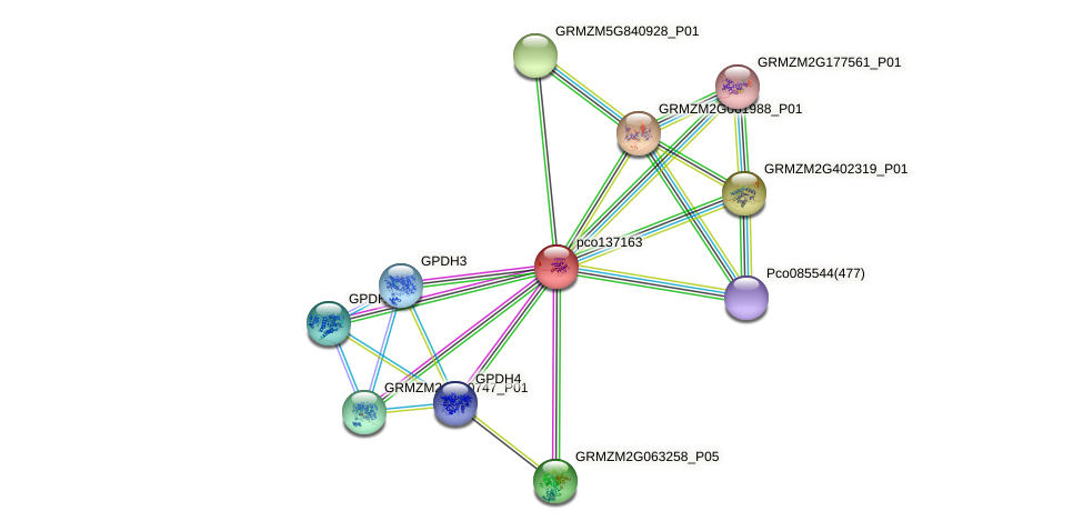 Zm.27623 protein (Zea mays) - STRING interaction network
