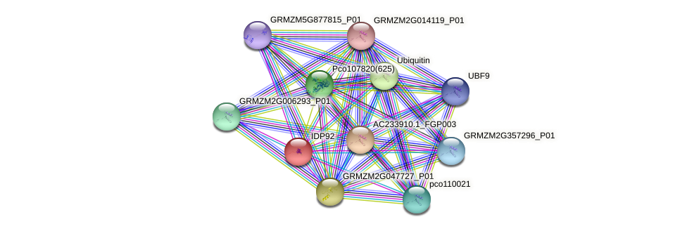 IDP92 protein (Zea mays) - STRING interaction network