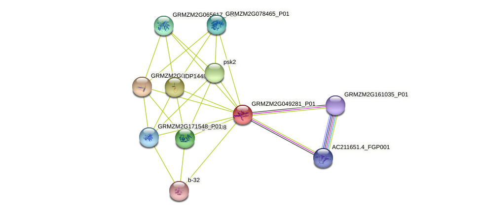 GRMZM2G049281_P01 protein (Zea mays) - STRING interaction network