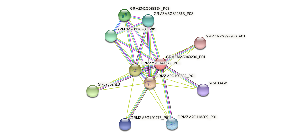 GRMZM2G049296_P01 protein (Zea mays) - STRING interaction network