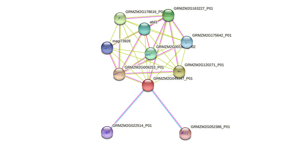 GRMZM2G049347_P01 protein (Zea mays) - STRING interaction network