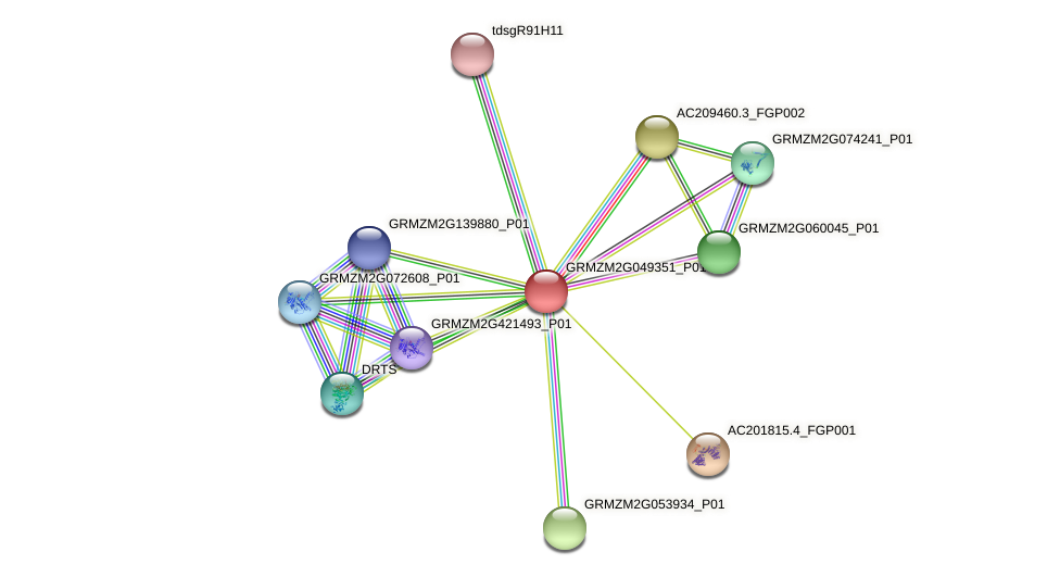 GRMZM2G049351_P01 protein (Zea mays) - STRING interaction network