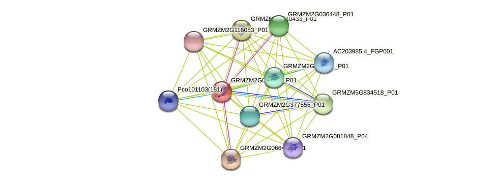 GRMZM2G049372_P01 protein (Zea mays) - STRING interaction network