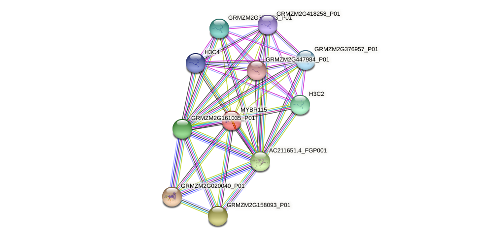 MYBR115 protein (Zea mays) - STRING interaction network
