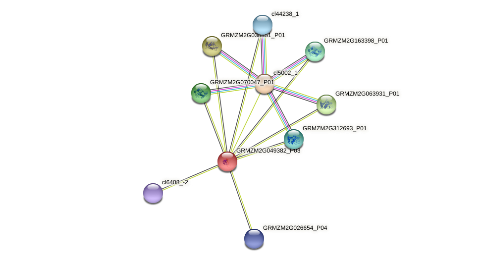 GRMZM2G049382_P03 protein (Zea mays) - STRING interaction network