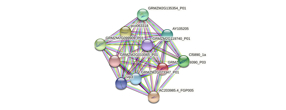 GRMZM2G049390_P03 protein (Zea mays) - STRING interaction network