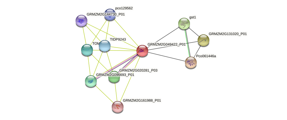 GRMZM2G049422_P01 protein (Zea mays) - STRING interaction network