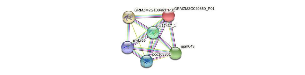 GRMZM2G049660_P01 protein (Zea mays) - STRING interaction network
