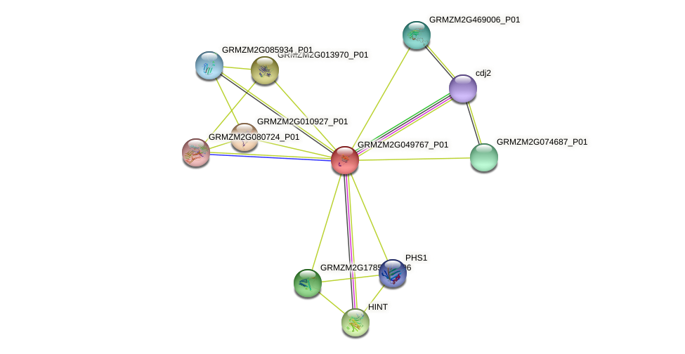 GRMZM2G049767_P01 protein (Zea mays) - STRING interaction network