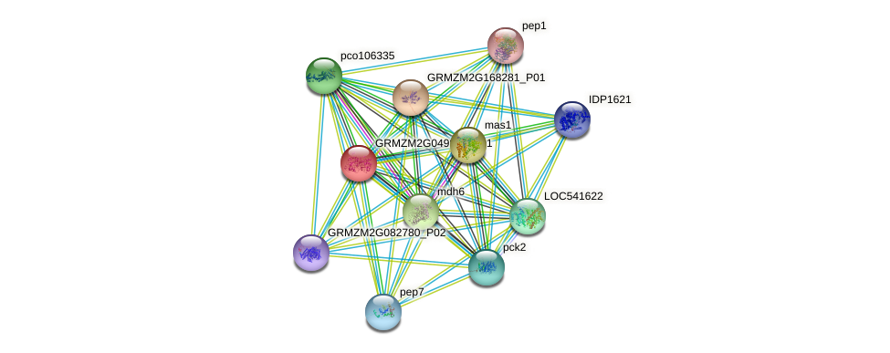 GRMZM2G049811_P01 protein (Zea mays) - STRING interaction network