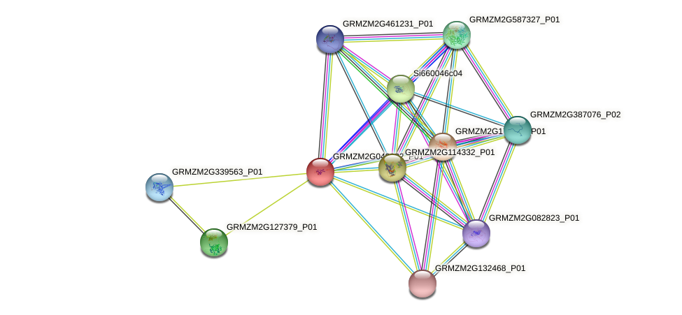 GRMZM2G049882_P01 protein (Zea mays) - STRING interaction network