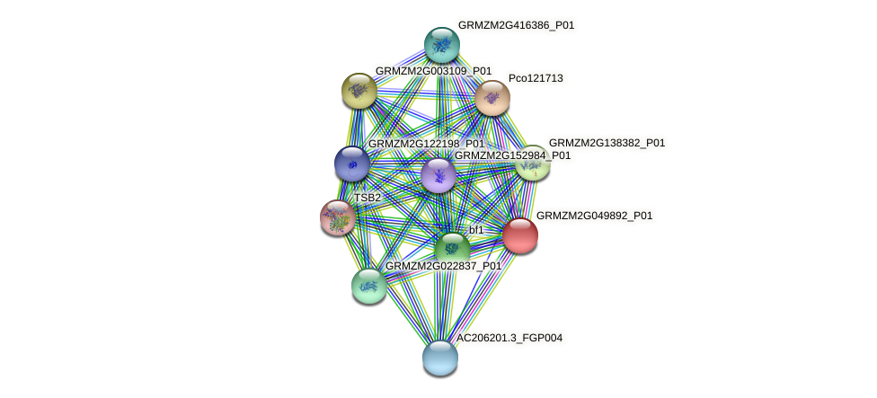 GRMZM2G049892_P01 protein (Zea mays) - STRING interaction network