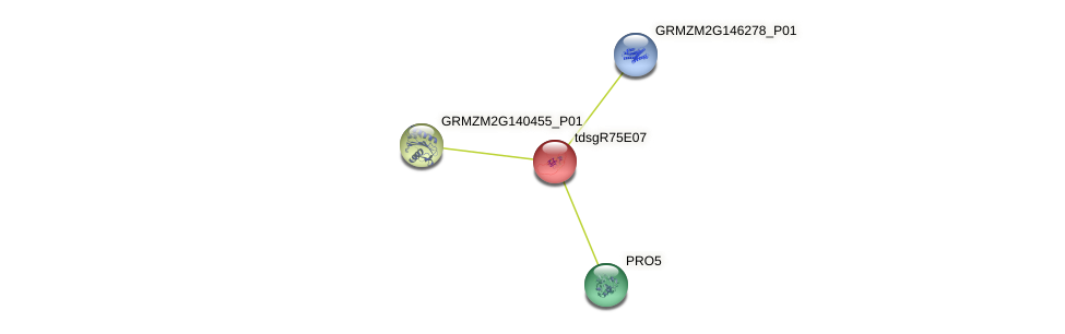 GRMZM2G049912_P01 protein (Zea mays) - STRING interaction network