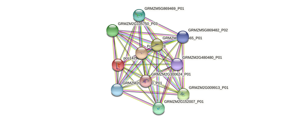 pco142961 protein (Zea mays) - STRING interaction network