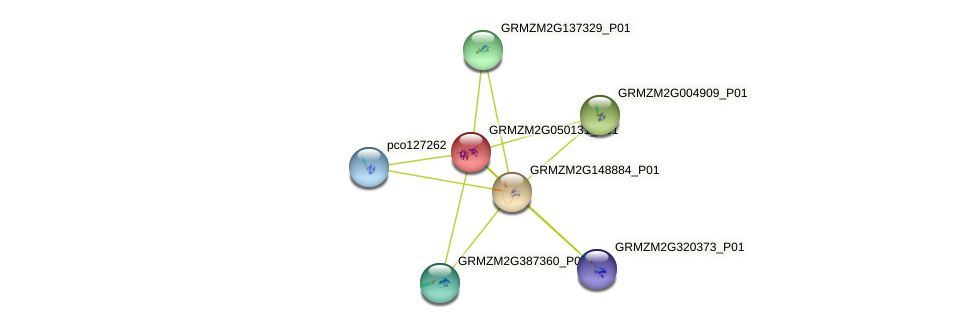 GRMZM2G050131_P01 protein (Zea mays) - STRING interaction network