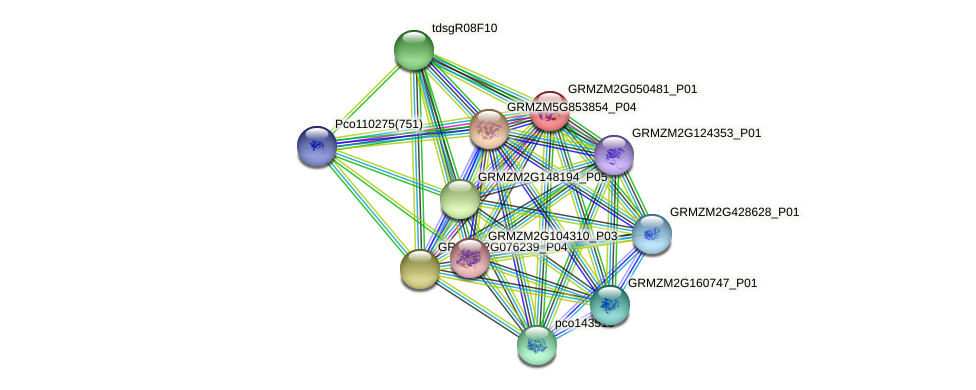 GRMZM2G050481_P01 protein (Zea mays) - STRING interaction network