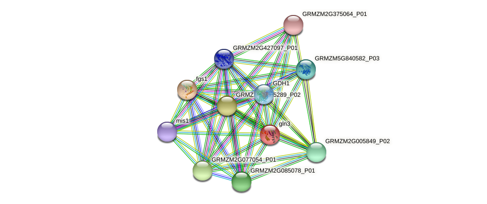 GLN6 protein (Zea mays) - STRING interaction network