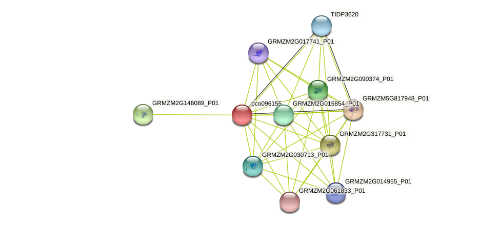 pco096155 protein (Zea mays) - STRING interaction network