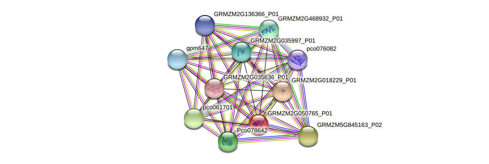 GRMZM2G050765_P01 protein (Zea mays) - STRING interaction network