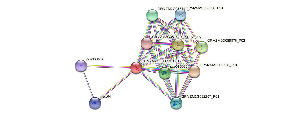 gpm81a protein (Zea mays) - STRING interaction network